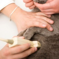 Gruda Veterinary Hospital provides veterinary ultrasound services in-house at our Santa Fe, New Mexico, facility.