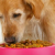 An appropriate amount of a well-balanced diet is vital to a dog's overall health and well-being.