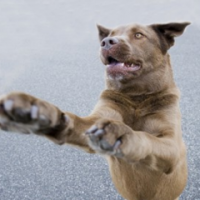 Rather than focusing on how to stop jumping up, teach your dog to greet visitors properly.