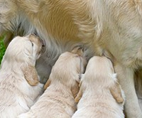 It is important to closely monitor your pet during birthing and seek veterinary care if you have any concerns.