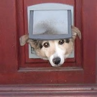 dogs thru doors